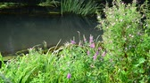 wrack : Meadow flowers on banks of a small river