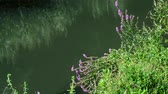 wrack : Flowers on river bank in Russia Stock Footage