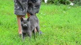 vinha : Gray cat stroking your childs legs