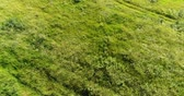 ervas daninhas : The flight on Steppe grass swaying in wind. Russia Stock Footage