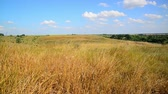 augusztus : Steppe landscape In central part of Russia