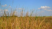 augusztus : Steppe grass In central part of Russia