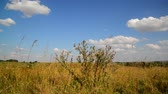 rod : Steppe landscape In central part of Russia