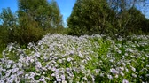 los : Lot of blue flowers with butterflies near the edge of forest