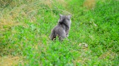 funny cat : Gray cat on green grass from the back.