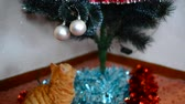 cravado : Kitten plays with toys on Christmas tree