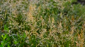feucht : Wild grass in droplets of water after rain in summer