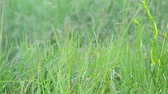 feucht : Grass in droplets of water after rain in summer Videos