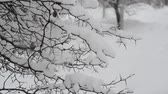 lote : branches of bush covered with snow