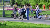 waggon : Moscow, Russia - May 15. 2018. mothers with strollers walk along boulevard in Zelenograd Stock Footage