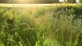 impostazioni : fragment of beautiful Meadow in the backlight