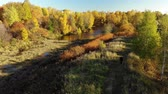 administrativo : Nizhny Kamensky pond in autumn in Moscow. Russia Stock Footage