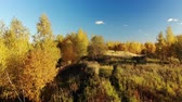administrativo : Autumn forest on outskirts of the city, Russia Stock Footage