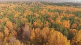 地平線 : sideways movement above beautiful autumn forest with deciduous and coniferous trees 動画素材