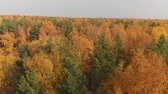 lombhullató : sideways movement above beautiful autumn forest with deciduous and coniferous trees Stock mozgókép
