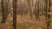 ecologisch : Autumn deciduous forest on clear day