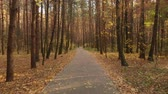 ecologisch : Asphalt path in the autumn deciduous forest