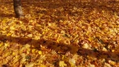 tereprendezés : Yellow maple leaves lie on the Earth Stock mozgókép