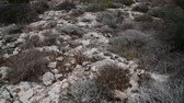 sassi : Dry grass on stony ground on the island of Cyprus