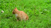 vagabundo : Lost homeless kitten meows in a nature Archivo de Video