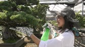 avental : Woman working in a greenhouse Stock Footage