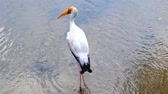 following : Crane, animal, zoo, protection, bird, visitor.