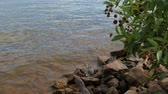 Steady shot of water gently slapping against the rocks at a lakeside, with plants and flowers nearby
