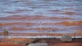 4K steady shot of ripples rolling to the red shorelines of a lake