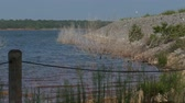 Small waves rolling in to the bank of a lake fenced off by a wire and tall green bushes Vídeos