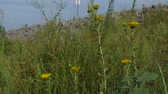 Steady shot of yellow flowers gently swaying with the breeze