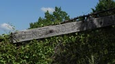 резной : Steady shot of a fence with a warning carved in the wood