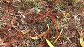 setembro : Steady shot of assorted colorful leaves fallen to the ground in autumn