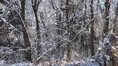 gleccser : Handheld shot of trees and the ground covered with snow on a winter morning