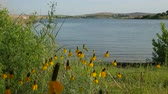à beira do lago : Steady shot of a scenic lakeside view with yellow flowers in the bank