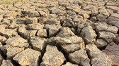 lack of water : cracked land and dead fish on hot and dry ground