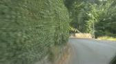 фехтование : A view of a green hedge from a car moving fast and very close to it