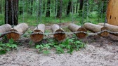 sideview : Side view of outdoor action adventure activity - obstacle course in the forest with wooden logs hanging on chains and swinging. Stock Footage