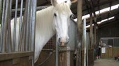 horse face : White horse standing in his stall in an old stable looks at the camera and then turns his head away. Stock Footage
