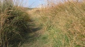 handheld : Walking countryside path through tall almost dry grass on the hill, low angle view, handheld Stock Footage