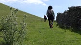 celta : Woman carrying backpack and two more people climbing green hill by the stone wall fence.There is a thistle with flowers, national emblem or symbol of Scotland.Woman stops and looks back at the camera