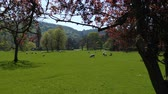 trawnik : Beautiful parkland in Ilam village, Staffordshire, England, United Kingdom
