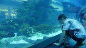 denizyıldızı : An amazing view of Dubai Aquarium full of big tropical fish swimming slowly in turquoise waters. A small boy sits and enjoys its bottom