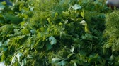 empolgante : Exciting macro shot of dill and parsley bunches with wet green leaves lying outdoors in a vegetable market on a sunny day in autumn Stock Footage