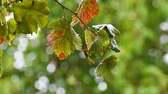 freshness : Rain drops falling on autumn leaves Stock Footage