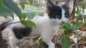 Baby stray cat standing under a tree and looking at camera
