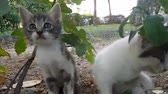 Baby stray cats sitting under a tree and looking at camera
