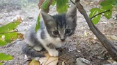 Baby stray cat sitting under a tree and looking at camera Stock Footage