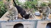 Street cats sitting on a box and looking at camera. Stock Footage