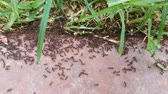 Ants working. Ants traffic. Stock Footage