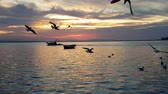 racek : Seagulls flying and swimming on the sea in Izmir - Turkey. There is a fishing boat on the sea.